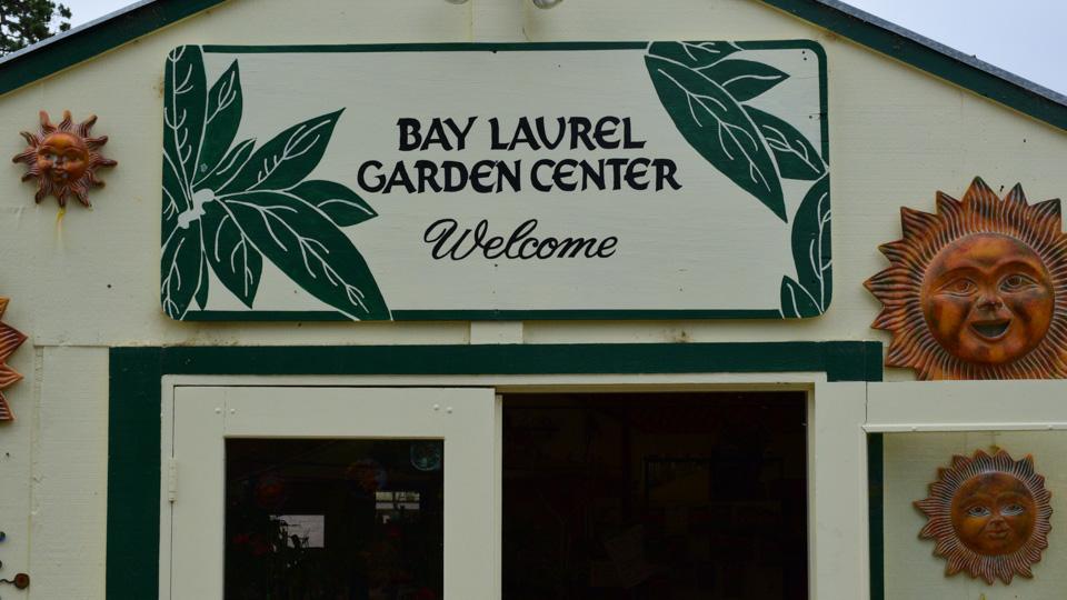 Bay Laurel Nursery 010e